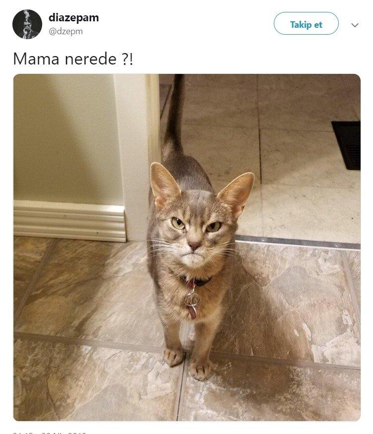 Mama Nerede