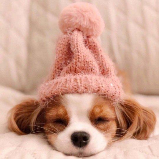 Sevimli Minik Köpek