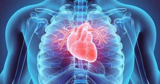 Kalp - İnsan Kalbi