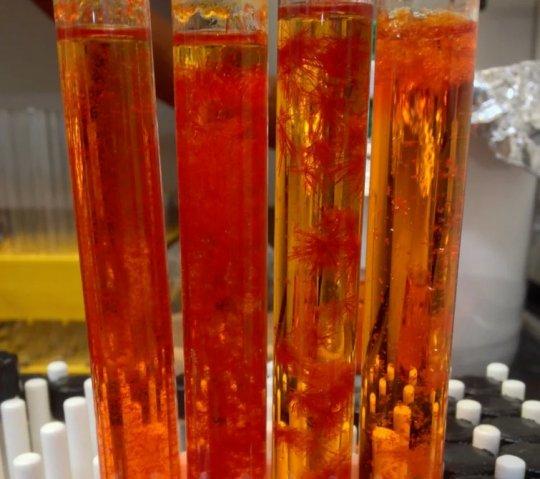 DSFO+ Molekülünün Görünüşü